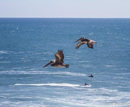 @surfbeatsradio.com-149